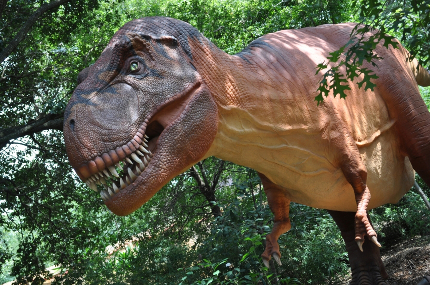 Real Dinosaurs T Rex 1000+ images about T-r...